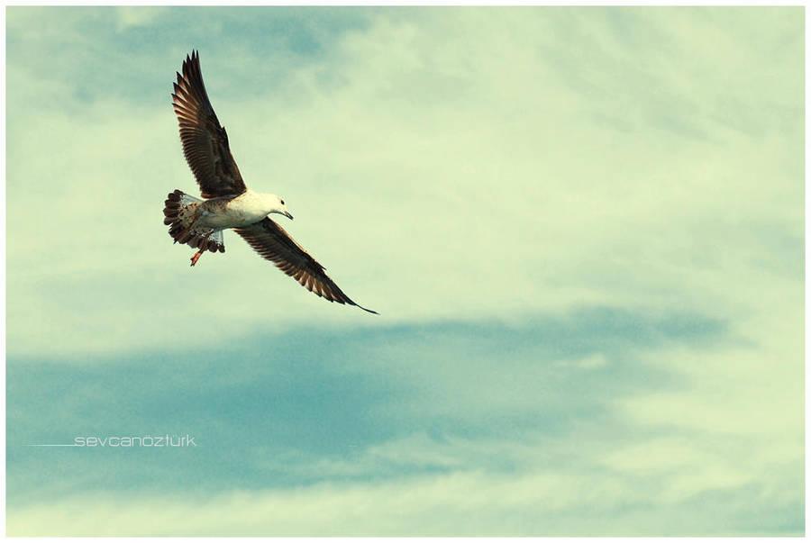 freedom 2 by sevCANN