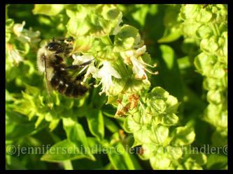 Bee u t ful by JennyLove