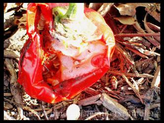 Pepper Bug by JennyLove