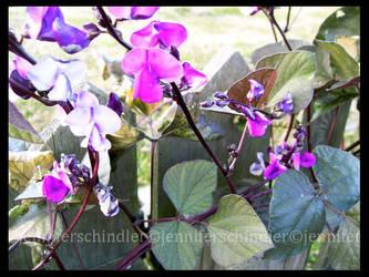 Fuchsia and Fence by JennyLove