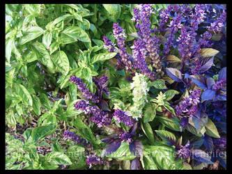 Green and Purple Mix by JennyLove
