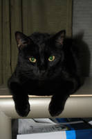 Black cat stock 1 by asphyxiate-Stock