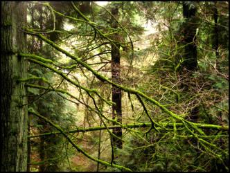 mossy Branch II by aelthwyn