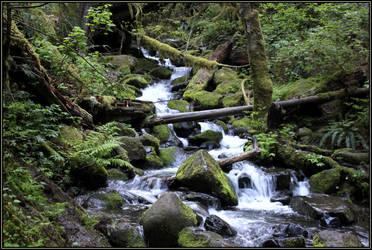 Woodland Stream IV by aelthwyn
