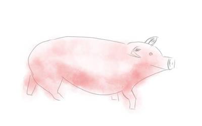 pig by dgryski