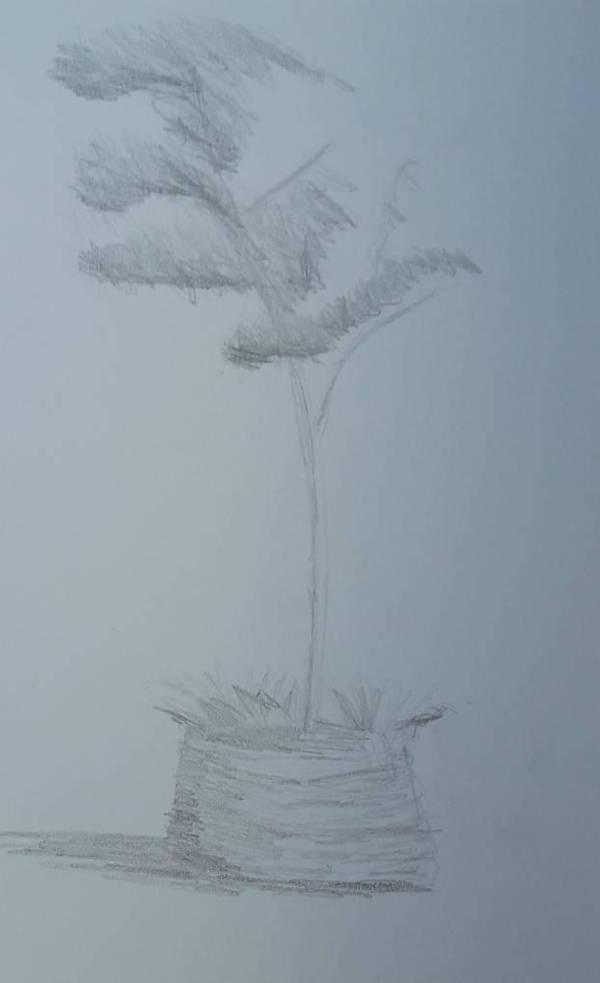 potted tree by dgryski