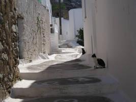 Greek Cats by IdanCarre