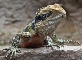-Lizard-18 by my-cousine-vinny
