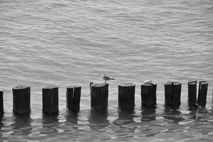 gull on pole by ackermaennchen