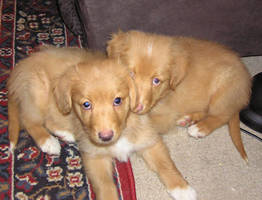 Puppies by happyandbleeding