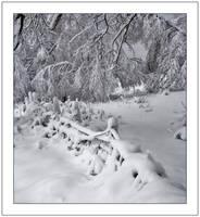 Winter wonderland by DL-Photography