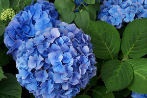 Natural Bouquet by Kata