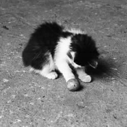 Kitty II. by Caramiela