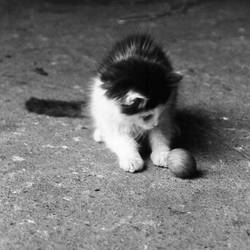 Kitty III. by Caramiela
