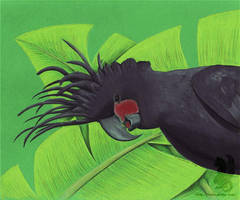 Cockatoo Photobomb by arikla