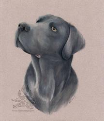Charcoal Labrador by arikla