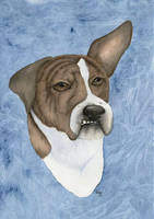 Gunner - Pet Portrait by arikla