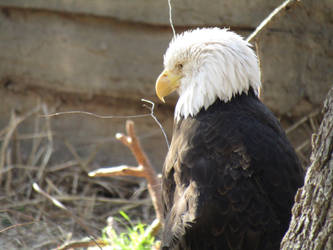 America! by Tigerstar52