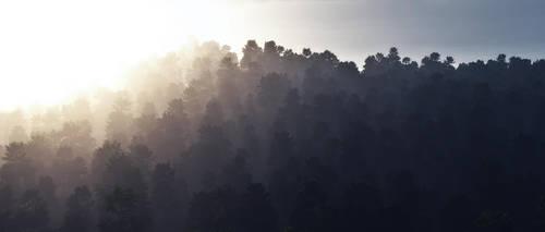 Misty Morning by Brukhar