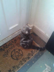 Salem sitting by the Door by MLPG1Brony
