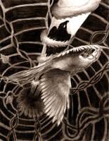 Kotori v.s Hikari by Anima-Lux-Artifex