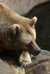 mr bear by MrNudge
