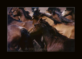 Horses by xelyn