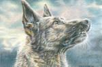 German Shepherd by Carol-Moore
