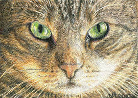 In A Cat's Eyes - ACEO by Carol-Moore