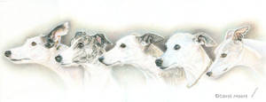 Lori's Whippets - Commission by Carol-Moore