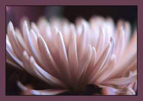 Enchanting Bloom by Carol-Moore