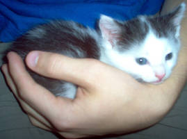 Kitten by GaGman