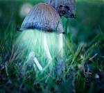 magical mushroom. by Altingfest