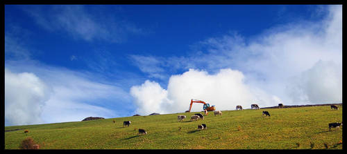 a herd of milking cows by GibDDN