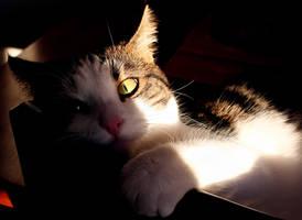 evil kitty cat by kitsune89