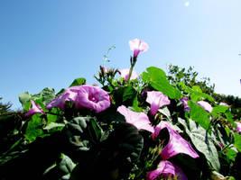 Flowers by kitsune89