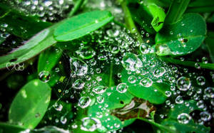 Liquid Diamonds by rjwarrier