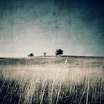 The Tree III by incisler