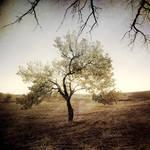 Soul Tree II by incisler