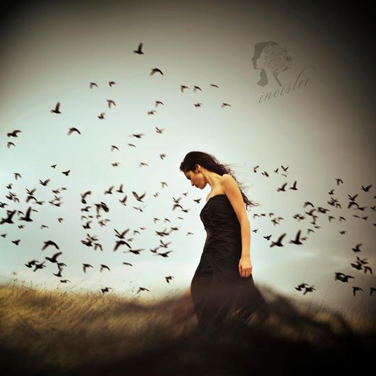 dark birds by incisler