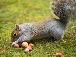 Squirrel 117: Squirrel Fast Food by EasternGraySquirrel