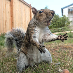 Squirrel 157: Dramatic Squirrel by EasternGraySquirrel