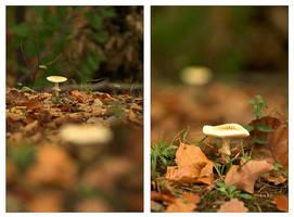 Mushroom duo by Lepen