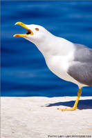 Seagull by Lepen