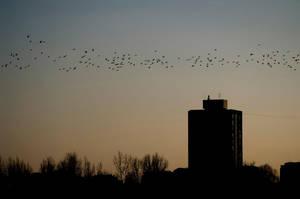 Birds by Lepen