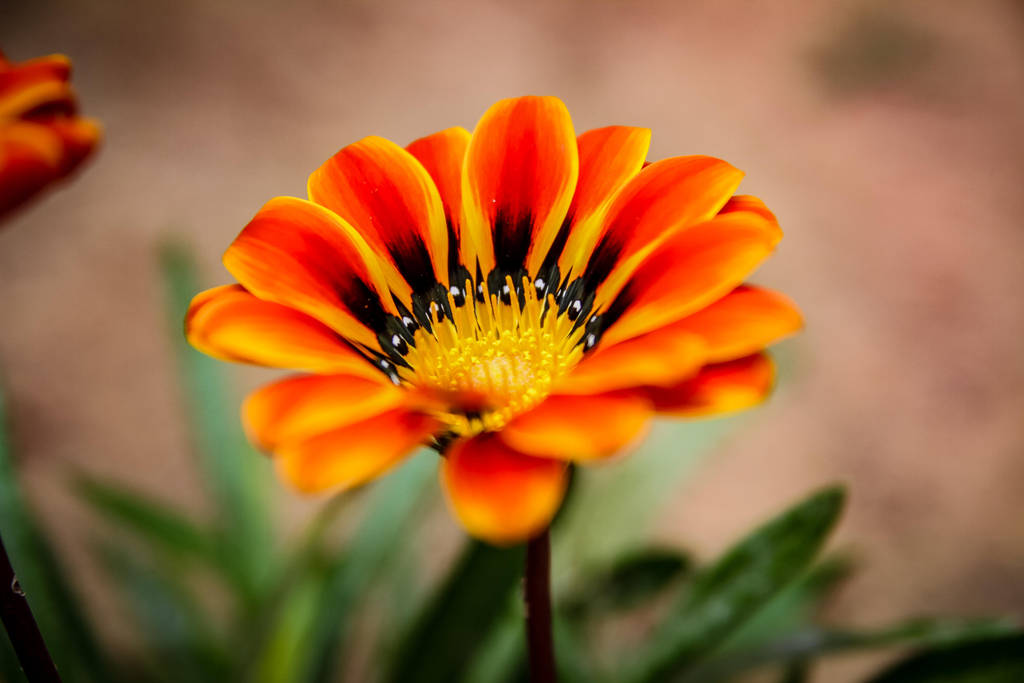 Spring flower by Mana-C-E