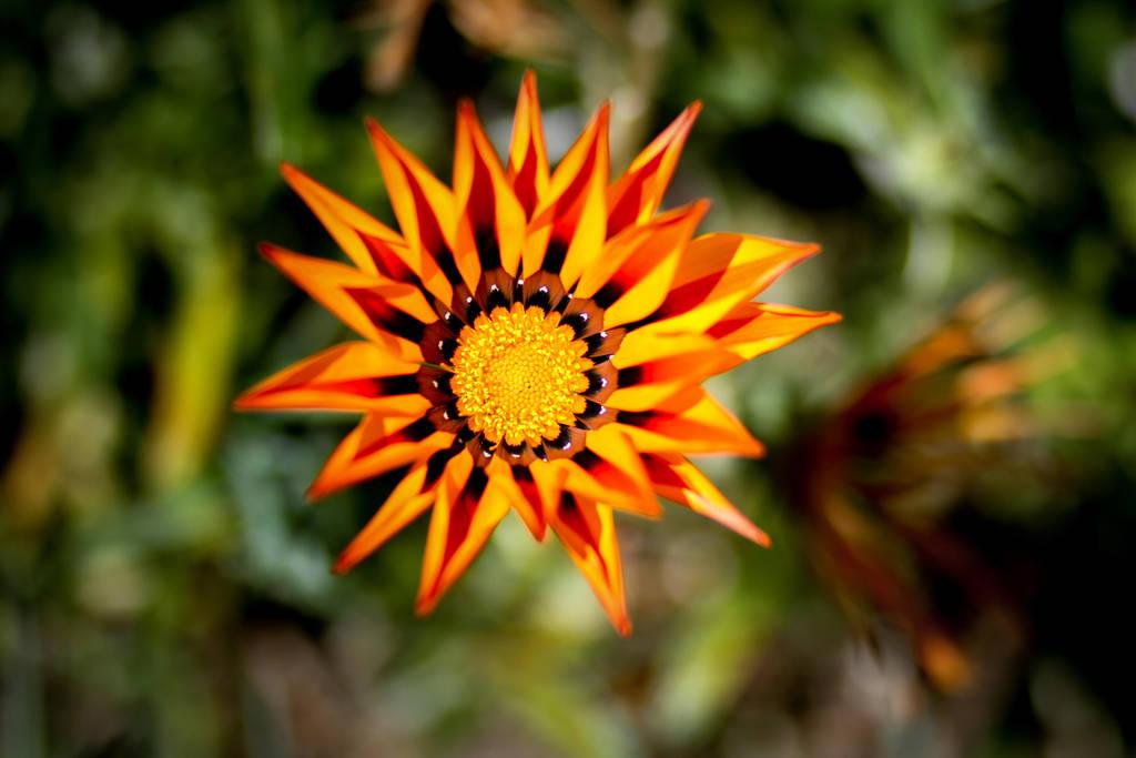 Starflower by Mana-C-E
