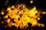 Fall foliage by Mana-C-E