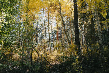 Overgrown trees by Mana-C-E