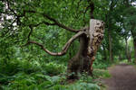 DSC_0123 Running Tree 3 by wintersmagicstock